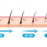 毛周期に合わせたペースが基本!医療レーザー脱毛へ通う間隔