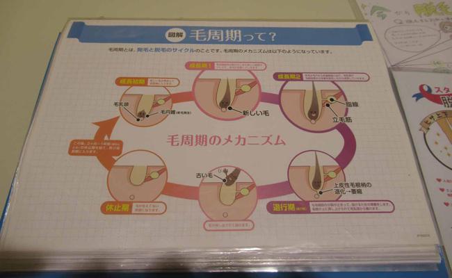 毛周期の説明資料